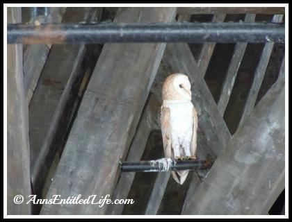 Harry Potter Owl Post