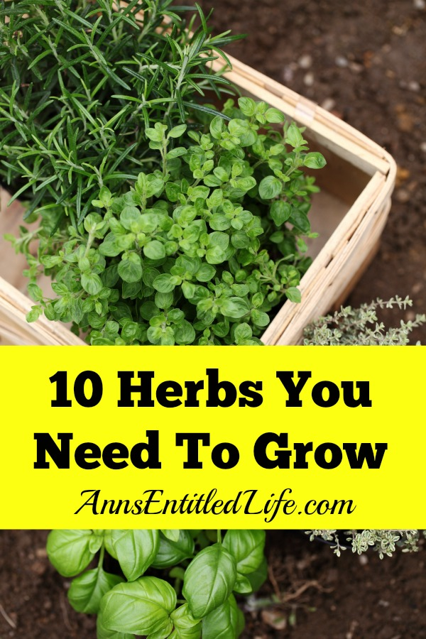 10 Herbs You Need To Grow. Fresh herbs have a long history of medicinal and culinary uses. And some herbs, have both properties. Depending on your goals, these 10 versatile herbs are ideal for most gardeners.