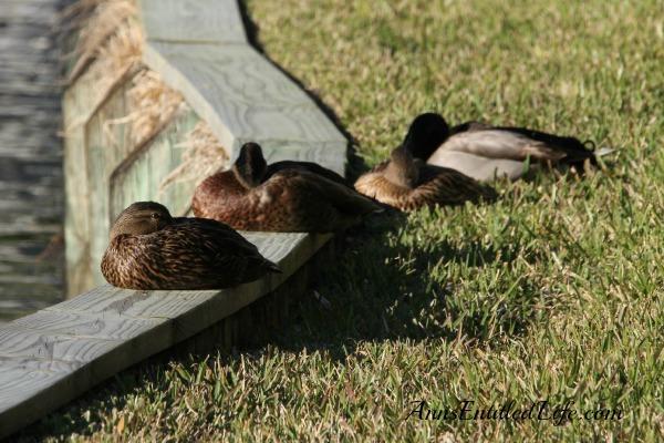 Birds of St Augustine