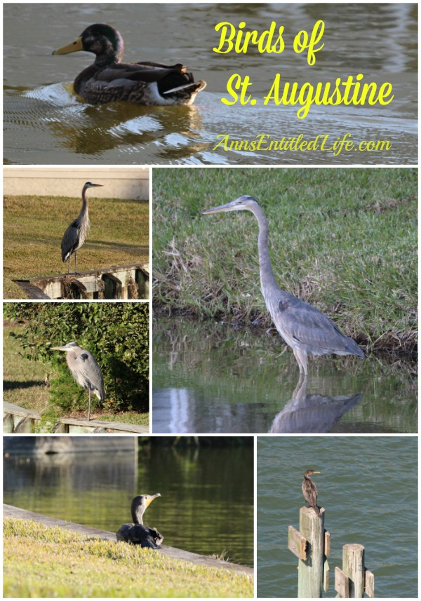 Birds of St Augustine
