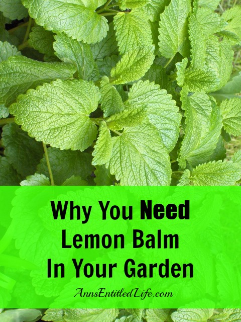 Why You Need Lemon Balm In Your Garden. Uses for lemon balm in your home, garden, beauty routine, cooking as well as lemon balm recipes, and Why You Need Lemon Balm In Your Garden.