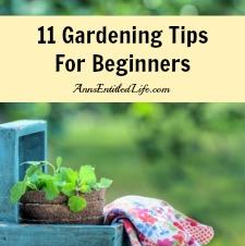 11 Gardening Tips For Beginners
