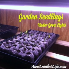 Growing Garden Seedlings Indoors