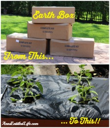 Earth Box Set-up