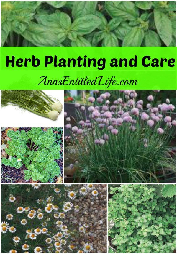 Herb Planting and Care