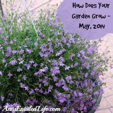 How Does Your Garden Grow – May, 2014