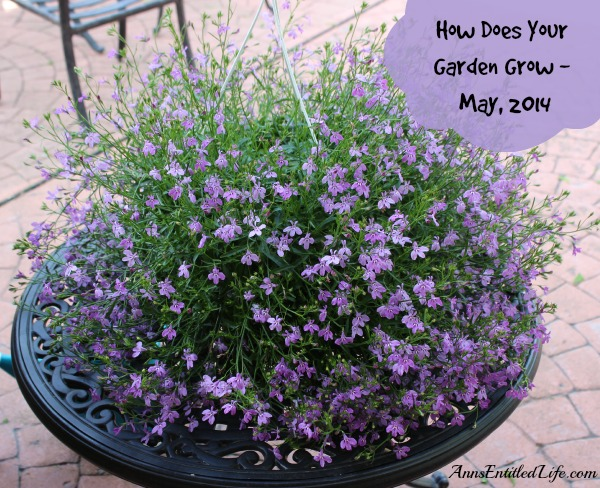 How Does Your Garden Grow - May, 2014