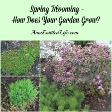 Spring Blooming – How Does Your Garden Grow?