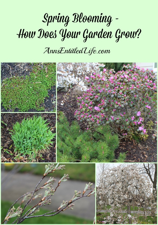 Spring Blooming - How Does Your Garden Grow?