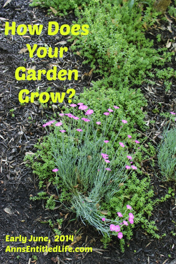 How Does Your Garden Grow? Early June, 2014