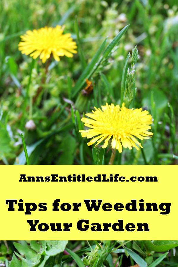 Tips For Weeding Your Garden