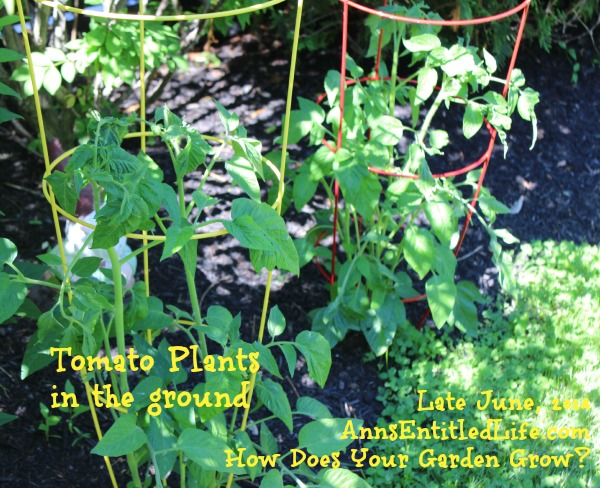 How Does Your Garden Grow? Late June, 2014