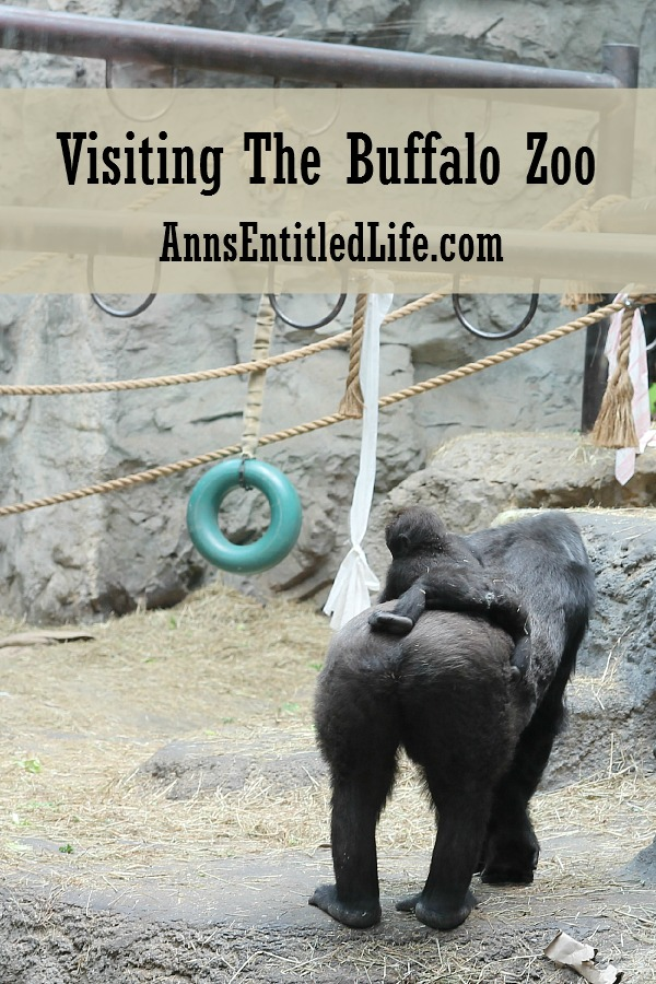 Visiting The Buffalo Zoo