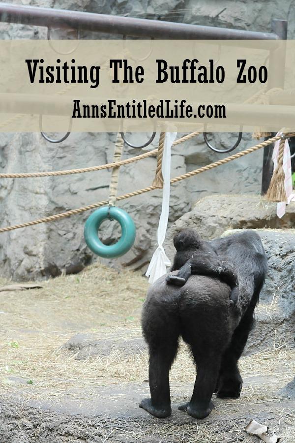 Visiting The Buffalo Zoo