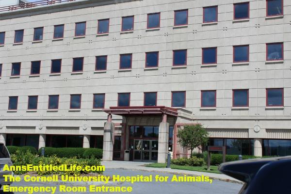 Cornell Vet Emergency Room