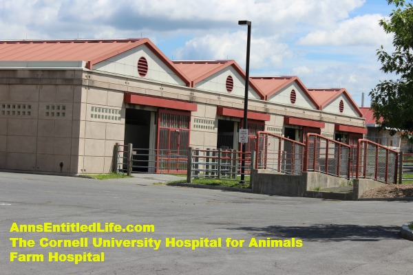 Cornell Vet Emergency Room