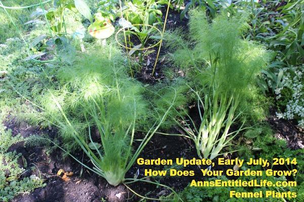 Garden Update, Early July, 2014