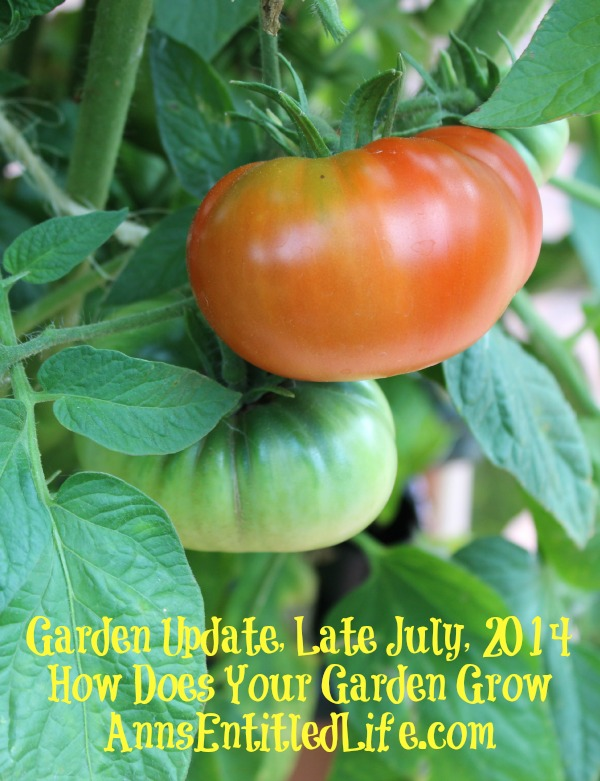 Garden Update, Late July, 2014