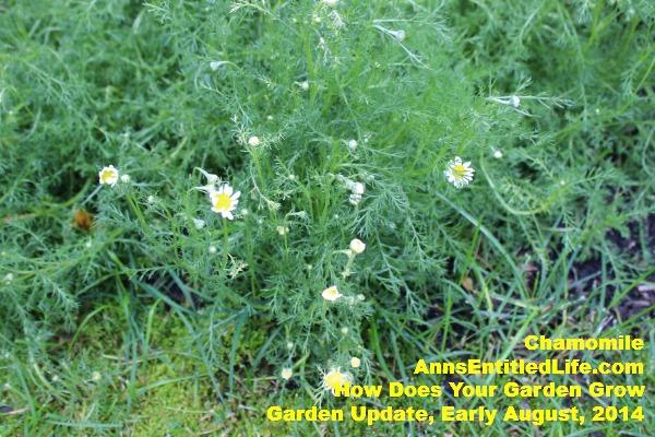 Garden Update, Early August,  2014