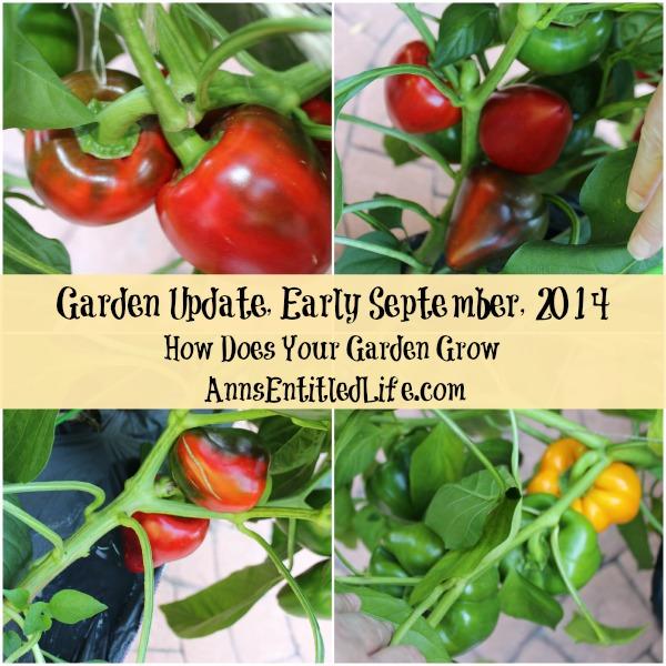 Garden Update, Early September, 2014