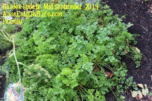 Garden Update, Mid September, 2014