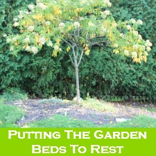 Putting The Garden Beds To Rest