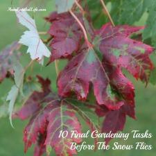 10 Final Gardening Tasks Before The Snow Flies