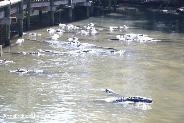 St. Augustine Alligator Farm