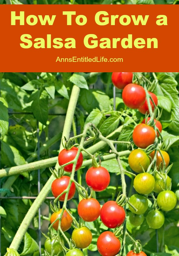How To Grow a Salsa Garden. Growing a themed garden is a lot of fun and brings a bit of creativity to your garden. On a hot summer day, break out the chips and salsa with a pitcher of margaritas for a nice relaxing afternoon. How awesome would it be if all the ingredients for your homemade salsa were grown right in your own organic backyard garden? Here is how to grow a salsa garden this year.