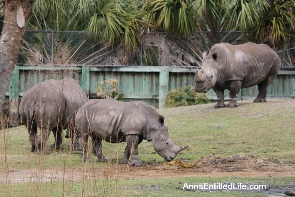 The Jacksonville Zoo