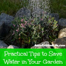 Practical Tips to Save Water in Your Garden