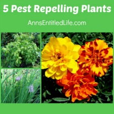 5 Pest Repelling Plants