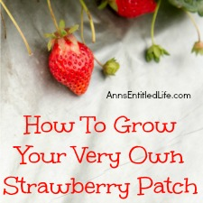 How To Grow Your Very Own Strawberry Patch
