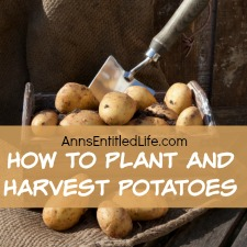 How to Plant and Harvest Potatoes
