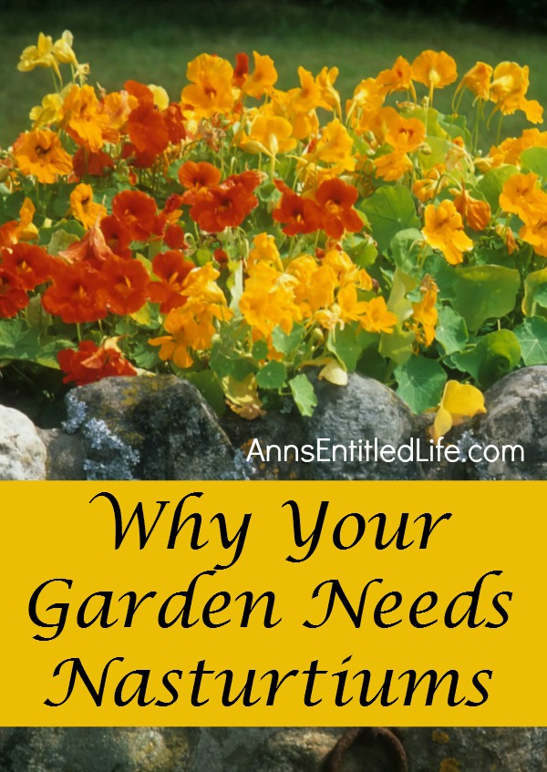 Image Result For Garden Flowers That Grow Every Year