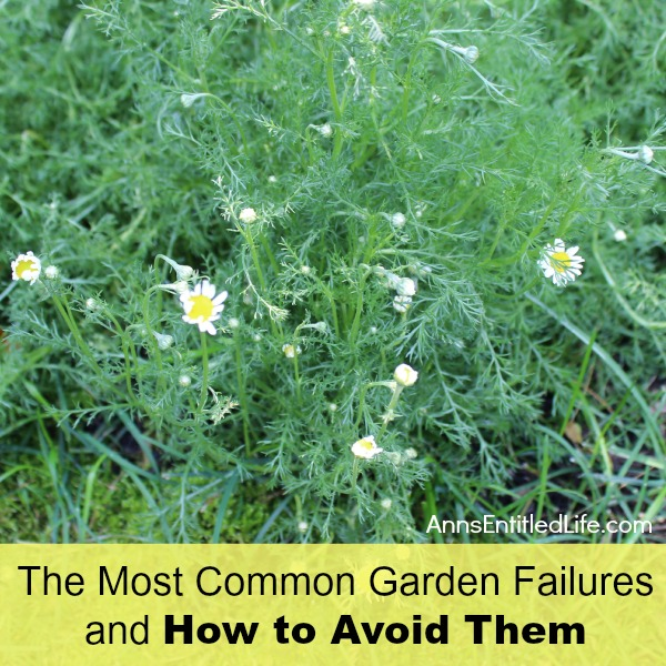 The Most Common Garden Failures and How to Avoid Them