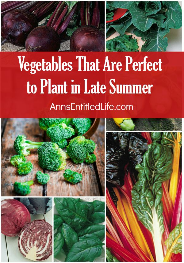 Vegetables That Are Perfect to Plant in Late Summer; the long dog days of summer are here as the days are hotter and the sun sets late into the night. Any cool season vegetable you had in your garden are at the end of their days and warm season veggies are still going strong. Now it is time to grow vegetables that are perfect to plant in late summer for the fall.