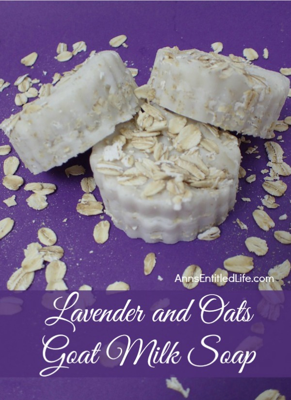 three lavender goat soap with oatmeal on a purple background
