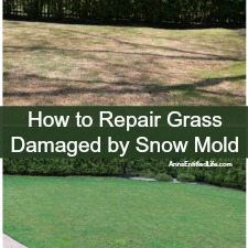 How to Repair Grass Damaged by Snow Mold