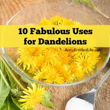 10 Fabulous Uses for Dandelions