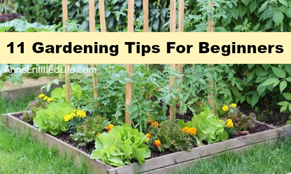 Garden tips for beginners for Gardening advice