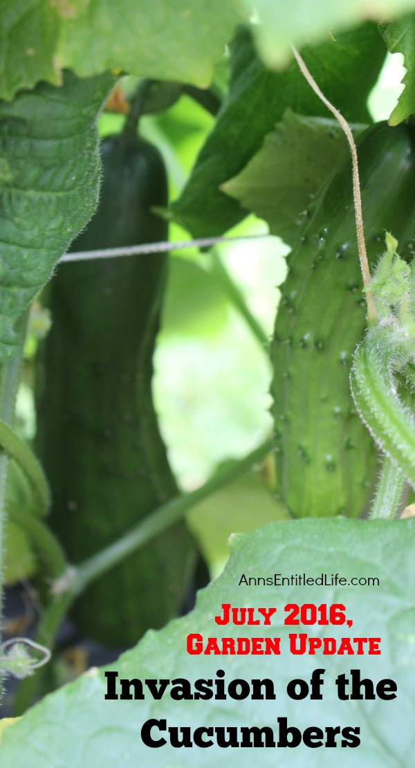 Invasion of the Cucumbers. It is time for a mid-summer gardening update!