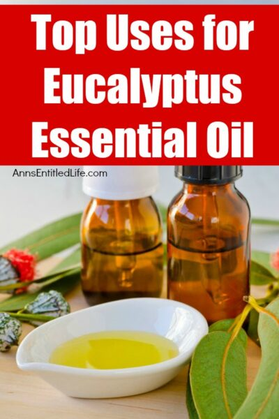 Top Uses for Eucalyptus Essential Oil