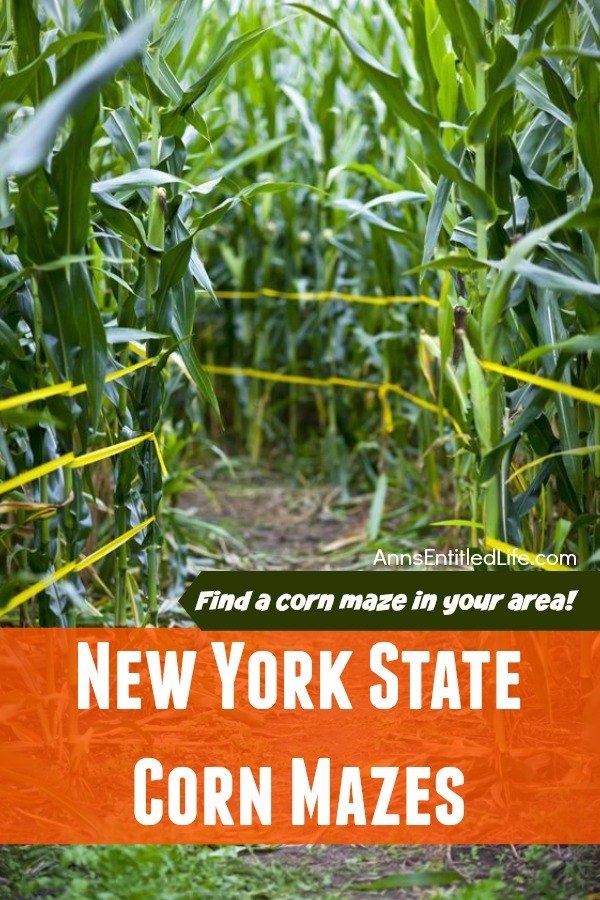 2019 New York State Corn Mazes. Have some great outdoor family fun this fall at a New York State corn maze this fall!! Whether you are looking to spend the day in a corn maze, for a fright night scream or corn mazes by moonlight there is something for everyone on this list of 2019 New York State Corn Mazes!