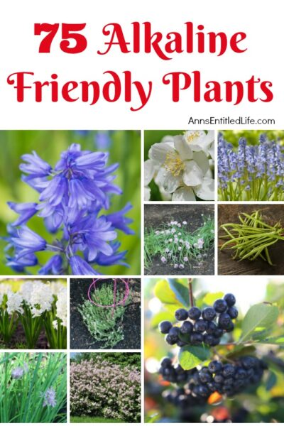 75 Alkaline Friendly Plants
