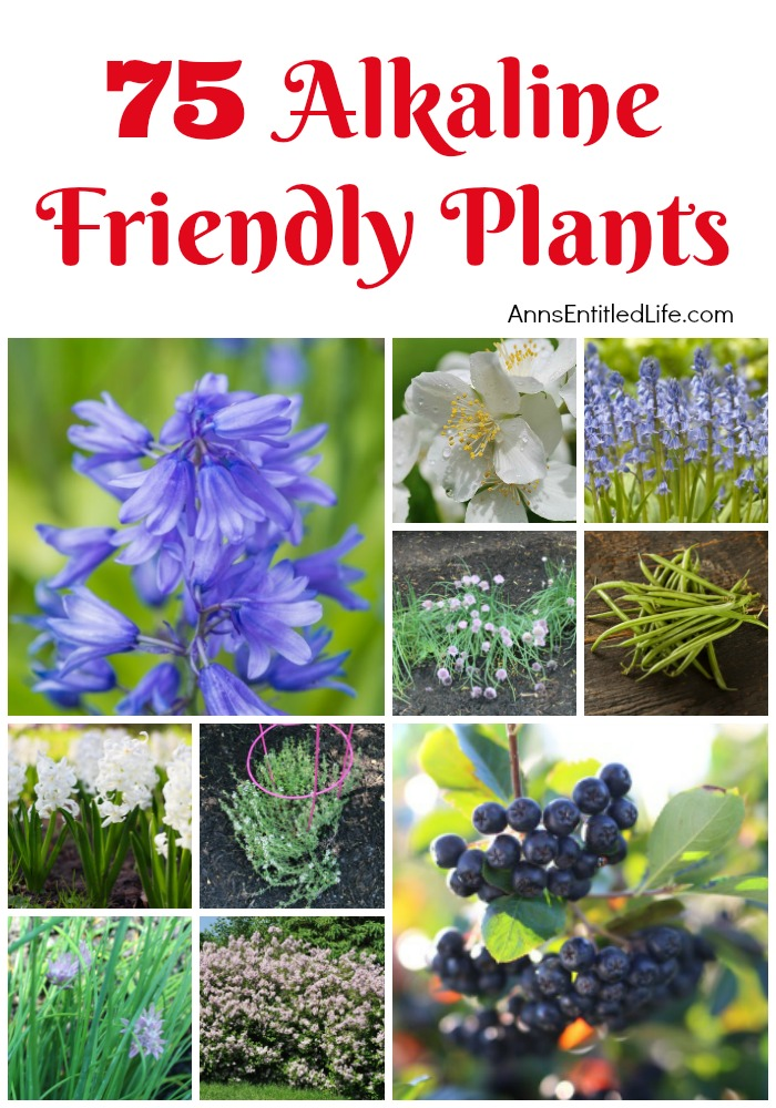 75 Alkaline Friendly Plants. If you have alkaline soil, you need plants that flourish within an alkaline soil environment. Flowers, vegetables, shrubs, and trees all have specific soil needs; these 75 Alkaline Friendly Plants are great choices for your gardening and landscaping needs.