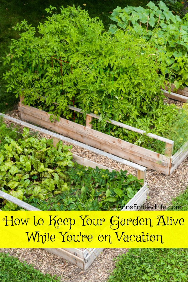 How to Keep Your Garden Alive While You Are on Vacation. Tips on how to prepare your garden before you leave for vacation, and what to do when you are away from the house for an extended period of time, so your plants are alive and thriving when you return home.