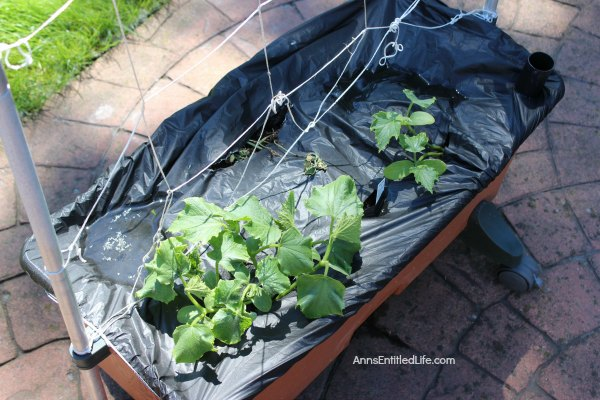 Spring Gardening. Spring planting, earth box planting, ground planting of fruits, vegetables and flowers for a wonderful and productive garden harvest.