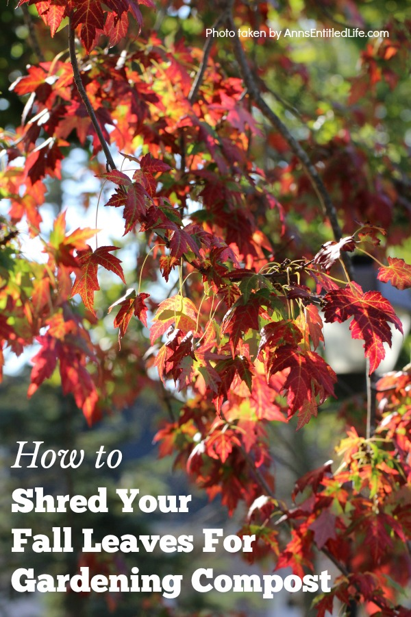 Shred Your Fall Leaves For Gardening Compost. Uses for fall leaves as compost, what to do, what not to do, what leaves to use, what leaves  not to use.