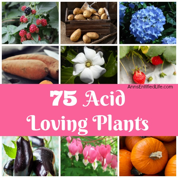 75 Acid Loving Plants. If you have acidic soil, you need plants that flourish within an acid soil environment. Flowers, vegetables, shrubs, and trees all have specific soil needs; these 75 acid loving plants are great choices for your gardening and landscaping needs.